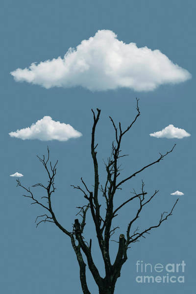 Photograph - Tree In The Clouds by David Lichtneker