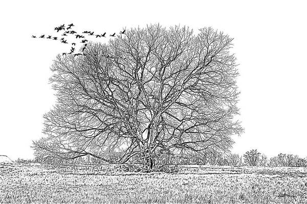 Drawing - Tree In The Field 090 - Sketch by Ericamaxine Price