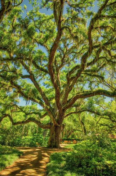 Photograph - Tree  by Jeffrey Klug