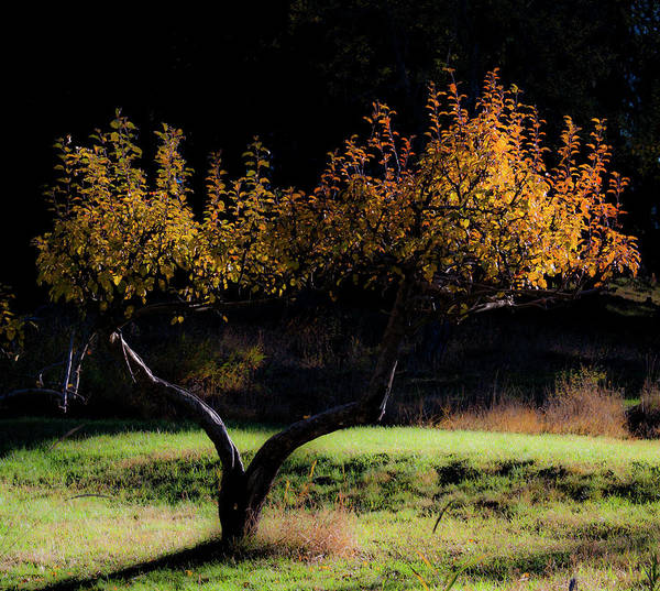 Photograph - Tree by Lee Santa