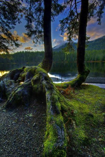 Ketchikan Photograph - Tree Legs by Carlos Rojas