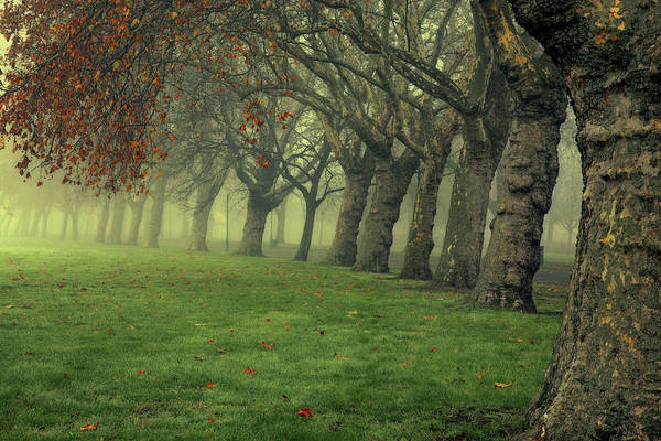 Trees In Fog Photograph - Tree Line by Ray Wise