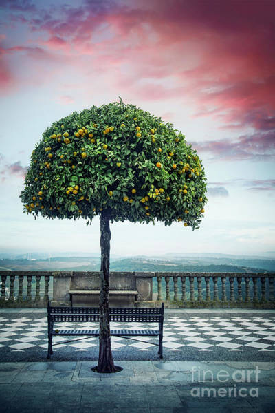 Andalusian Wall Art - Photograph - Tree Of Beauty by Evelina Kremsdorf
