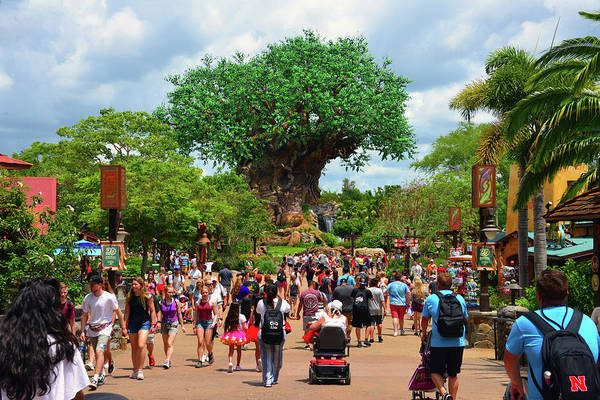 Wall Art - Photograph - Tree Of Life And Entrance Way by David Lee Thompson