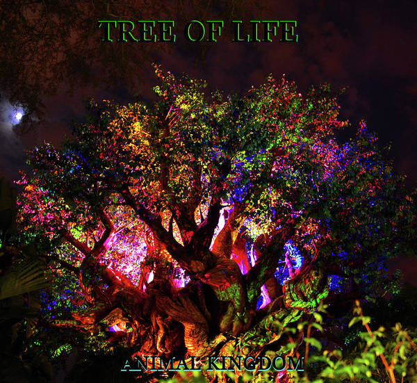 Wall Art - Photograph - Tree Of Life And Full Moon Poster A by David Lee Thompson