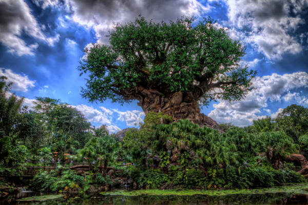 Photograph - Tree Of Life by Brad Granger