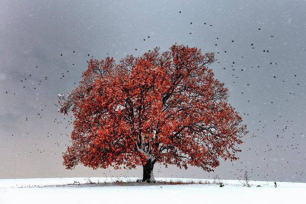 Photograph - Tree Of Life by Evgeni Dinev