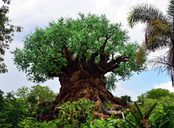 Wall Art - Photograph - Tree Of Life Landscape by David Lee Thompson