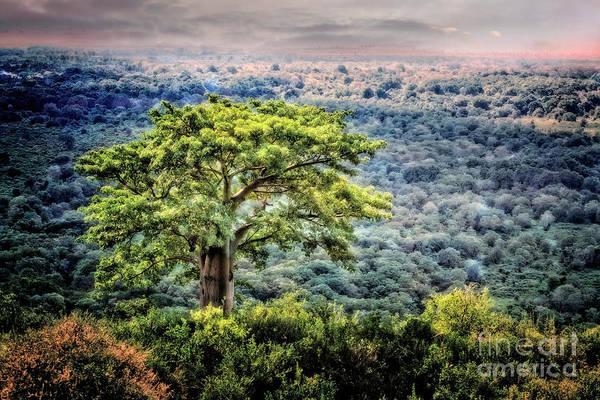 Photograph - Tree Of Life by Scott Kemper