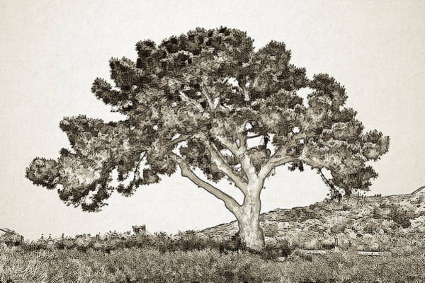 Digital Art - Tree Of Life Sketch by Alison Frank