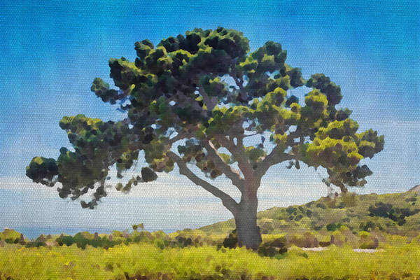 Photograph - Tree Of Life Watercolor by Alison Frank
