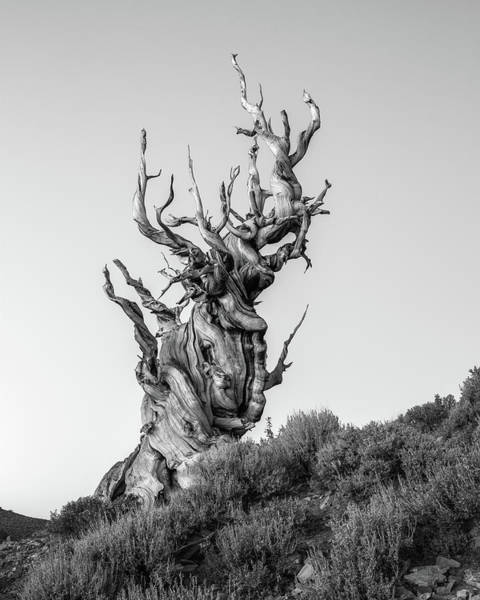 Wall Art - Photograph - Tree Of Pain by Davorin Mance