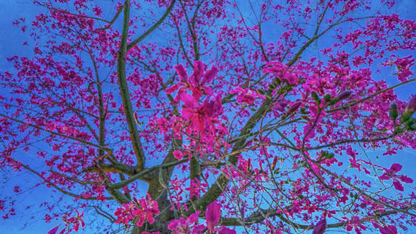 Photograph - Tree Of Passion - Fuel My Soul by Kenneth James