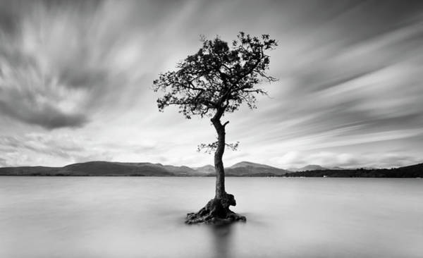 Ayrshire Photograph - Tree Of The Loch by Bluefinart