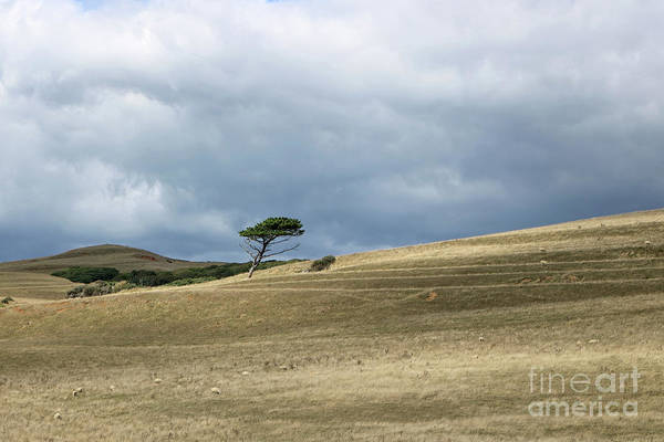 Photograph - Tree On The Hill by Julia Gavin