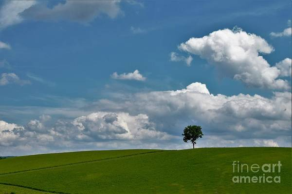 Wall Art - Photograph - Tree On The Hill by Suzanne Wilkinson