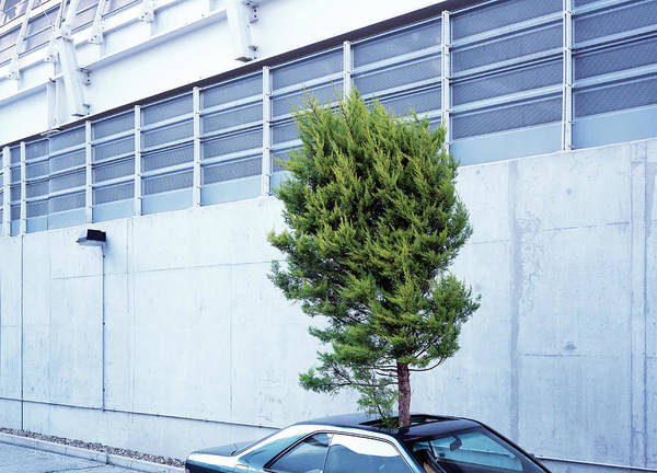 Out Of Context Photograph - Tree Protruding Through Car Sunroof by Kelvin Murray