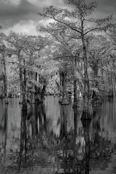 Photograph - Tree Reflections #1 by David Heilman