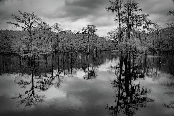 Photograph - Tree Reflections by David Heilman