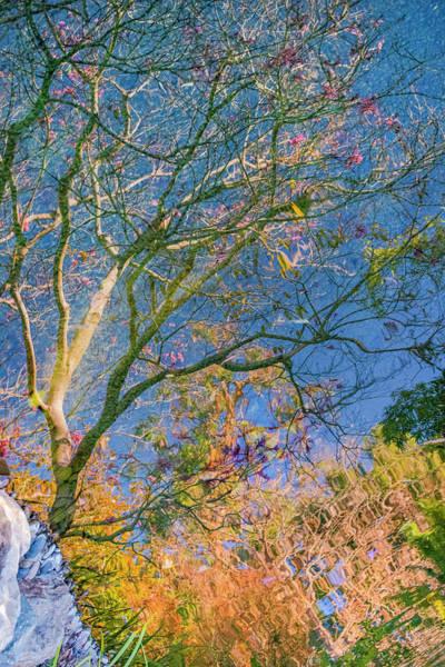 Photograph - Tree Reflections by Jonathan Hansen