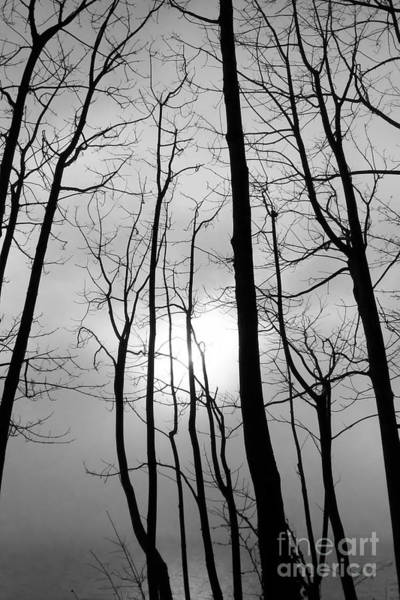 Photograph - Tree Series 1 by Jeni Gray