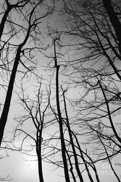Photograph - Tree Series 3 by Jeni Gray