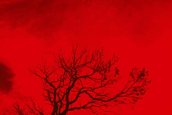 Horizontal Abstract Photograph - Tree Silhouette Against A Red Sky by Rob Lang