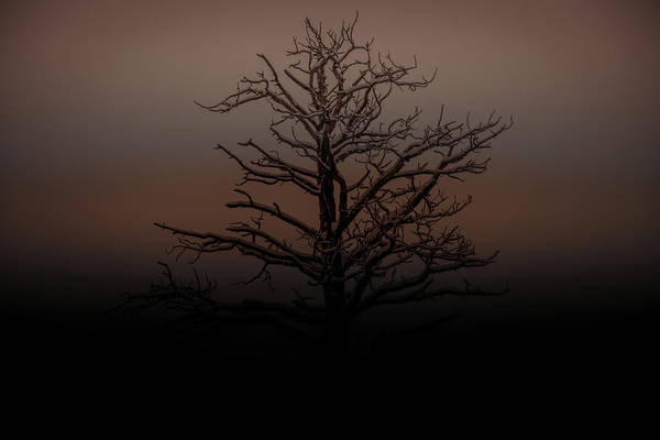 Photograph - Tree Silhouette  by Dheeraj Mutha