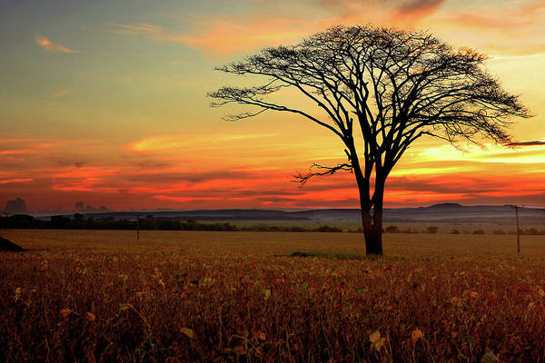 Silhouette Photograph - Tree Silhouette by E.hanazaki Photography