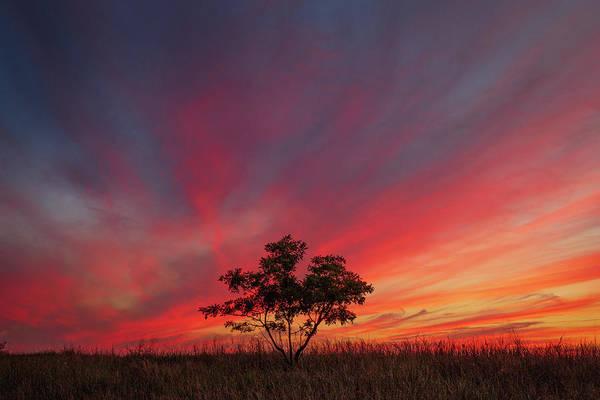 Photograph - Tree Silhouette  by Emmanuel Panagiotakis