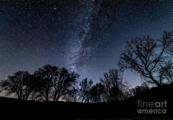 Photograph - Tree Silhouette  by Willard Sharp