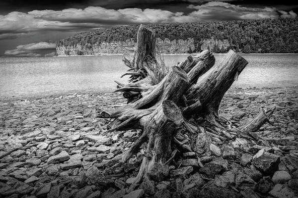 Photograph - Tree Stump In Black And White At Fayette Michigan State Park by Randall Nyhof
