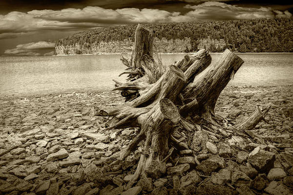 Photograph - Tree Stump In Sepia Tone At Fayette Michigan State Park by Randall Nyhof