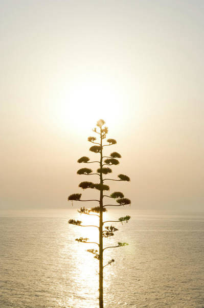 Wall Art - Photograph - Tree, Sunset Backlit by Simon Plant
