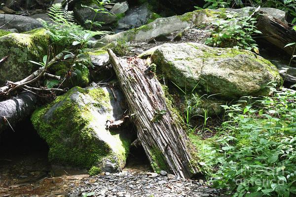 Photograph - Tree Trunk Along Alum Cave Creek by Phil Perkins