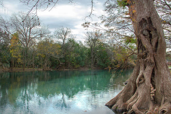 Wall Art - Photograph - Tree Trunk And San Marcos River by Amy Sorvillo