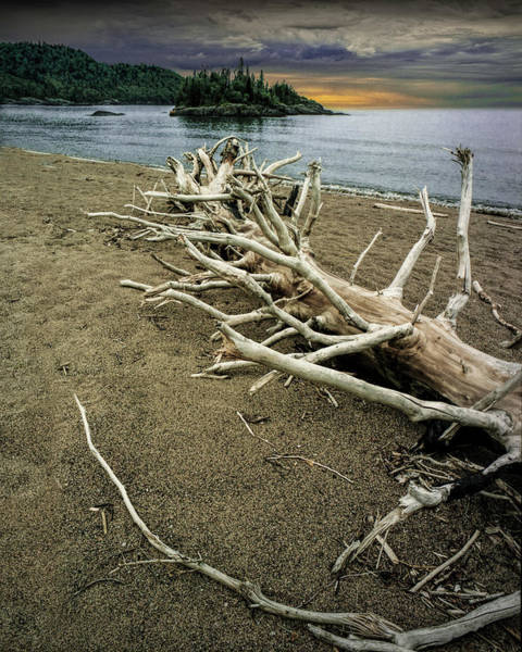 Photograph - Tree Trunk On Driftwood Beach At Sunrise Near Wawa Ontario by Randall Nyhof