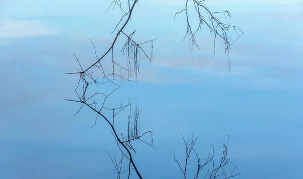 Wall Art - Photograph - Tree Twigs And Reflections At Green Lake by Marv Vandehey
