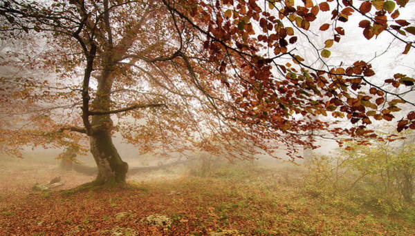 Photograph - Tree With Fog by Jesús I. Bravo Soler