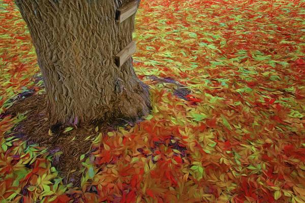 Rungs Wall Art - Photograph - Treehouse Access by Nikolyn McDonald