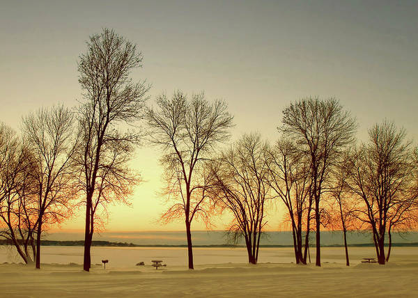 Photograph - Treeline Skyline by Todd Klassy