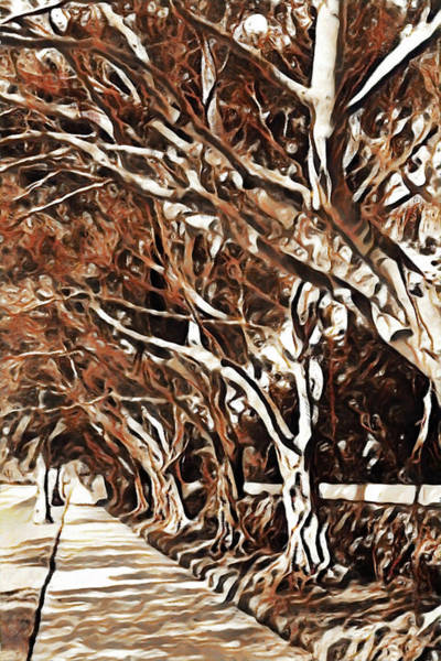 Digital Art - Treelined by Jody Lane