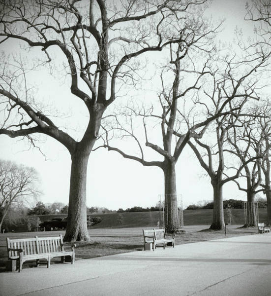 Trees And Benches In Park Art Print