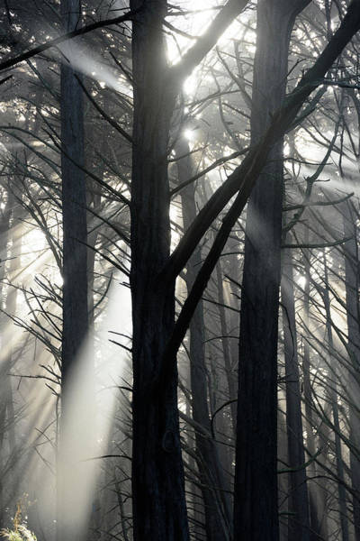 Photograph - Trees And Fog by Janet Kopper