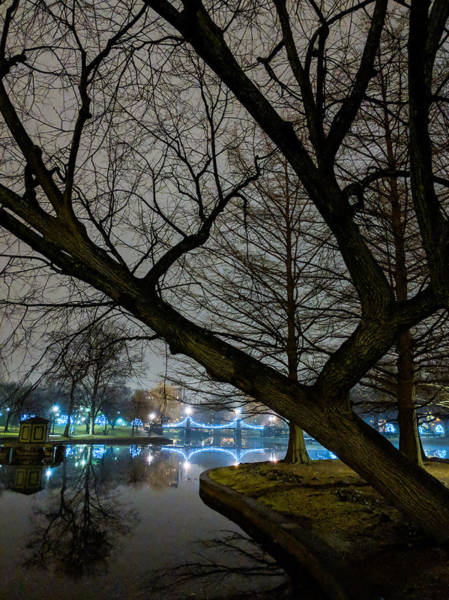Photograph - Trees And Lights by Christopher Brown