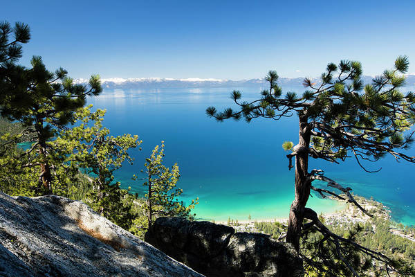 Wall Art - Photograph - Trees At Lakeshore, Lake Tahoe by Panoramic Images