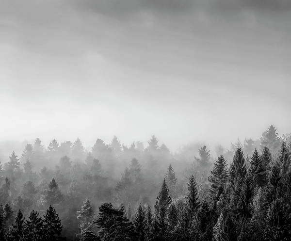 Baden Wuerttemberg Photograph - Trees Covered With Fog In Autumn, Baden by Panoramic Images