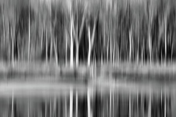 Wall Art - Photograph - Trees - Desoto Lake - Black And White by Nikolyn McDonald