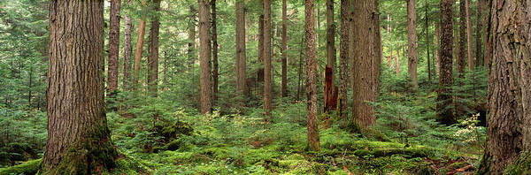 Wall Art - Photograph - Trees In A Forest, Cheakamus Lake by Panoramic Images