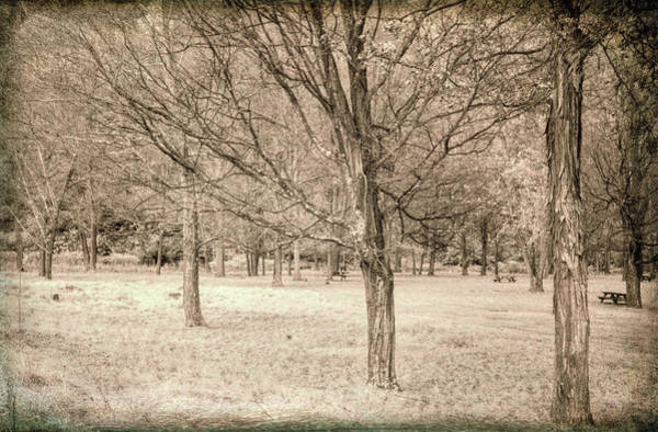 Photograph - Trees In A Row by Jim Cook